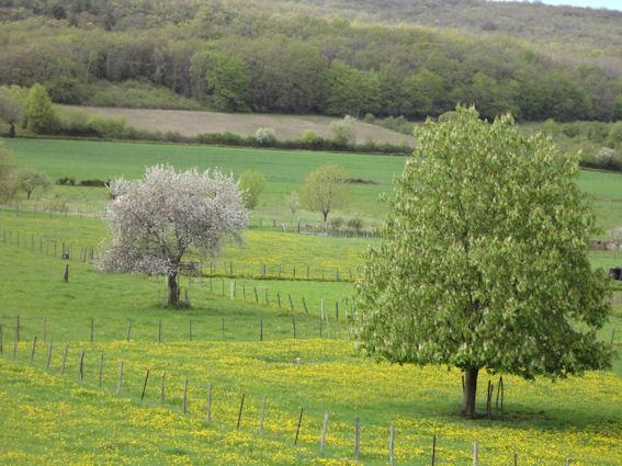 Comprendre et pratiquer l'apiculture douce