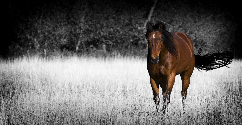Venez-murmurer-avec-les-chevaux