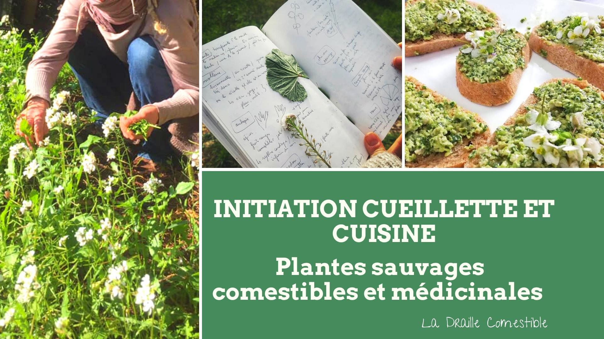 Initiation cueillette plantes sauvages comestibles et médicinales et cuisine