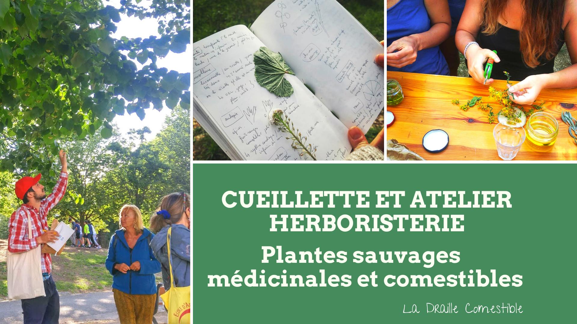 Balade plantes sauvages médicinales et comestibles et atelier herboristerie