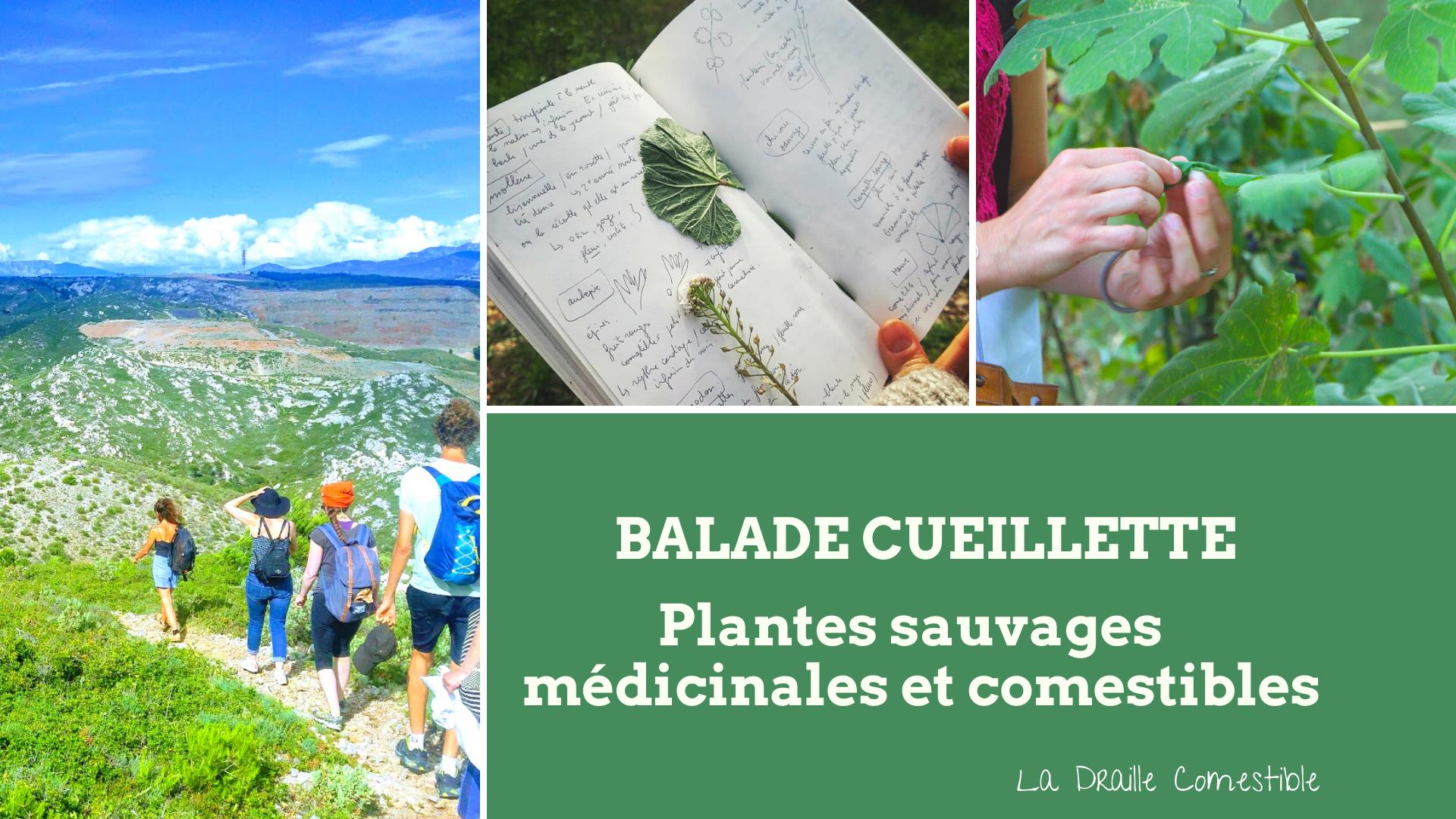 Balade découverte des plantes sauvages comestibles et médicinales et cueillette